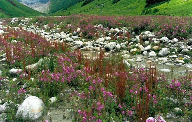 Najlepši nacionalni parkovi sveta Dolina-cvijeca-3