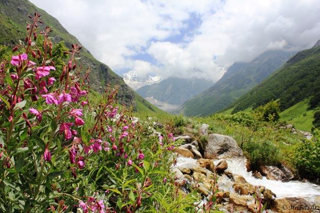 Najlepši nacionalni parkovi sveta Dolina-cvijeca-6