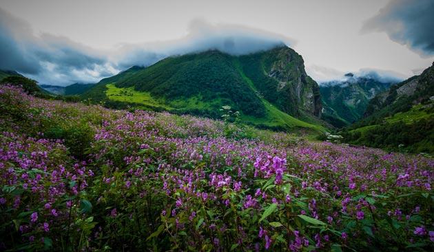 Najlepši nacionalni parkovi sveta Dolina-cvijeca-9