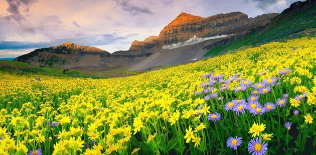 Najlepši nacionalni parkovi sveta Dolina-cvijeca