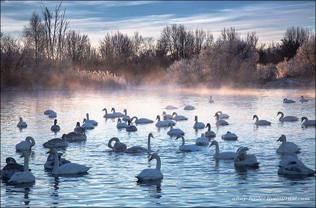 Jezera - Page 4 Labudje-jezero-8