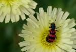 Macros/  proxi/  insectes  - Page 32 2020_04_26__150_88