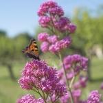 Macros/  proxi/  insectes  - Page 33 2020_05_7__150_15