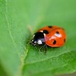 Macros/  proxi/  insectes  - Page 40 2020_06_16__150_78