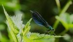 Macros/  proxi/  insectes  2020_06_21__150_85