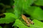 Macros/  proxi/  insectes  2020_06_24__150_22