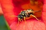 Macros/  proxi/  insectes  - Page 2 2020_06_26__150_45