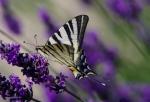 Macros/  proxi/  insectes  - Page 3 2020_07_02__150_35