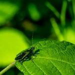 Macros/  proxi/  insectes  - Page 3 2020_07_4__150_51