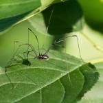 Macros/  proxi/  insectes  - Page 4 2020_07_6__150_14
