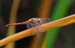 Macros/  proxi/  insectes  - Page 13 2020_09_19__150_34