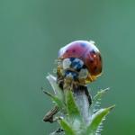 Macros/  proxi/  insectes  - Page 14 2020_09_29__150_25