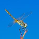 Macros/  proxi/  insectes  - Page 19 2021_04_03__150_62