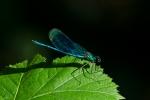 Macros/  proxi/  insectes  - Page 19 2021_04_8__150_29