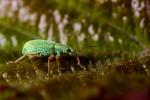 Macros/  proxi/  insectes  - Page 21 2021_05_6__150_1