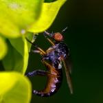 Macros/  proxi/  insectes  - Page 28 2021_06_29__150_69