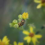 Macros/  proxi/  insectes  - Page 29 2021_07_04__150_61