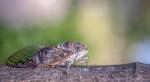 Macros/  proxi/  insectes  - Page 29 2021_07_06__150_83
