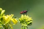 Macros/  proxi/  insectes  - Page 30 2021_07_15__150_21