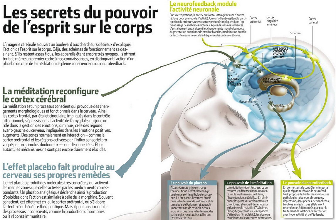 Le cerveau  - Page 3 Guerir2
