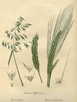 Liste de plantes pour les soins 101264