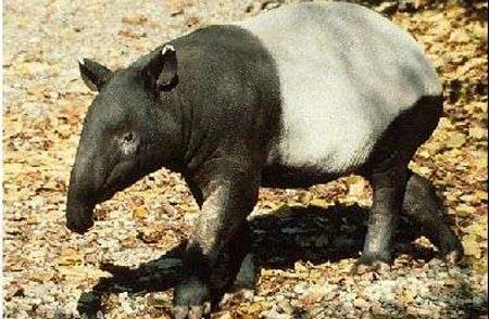 اغرب  حيوانات في العالم -- شوفو الصور 22