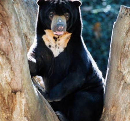 اغرب  حيوانات في العالم -- شوفو الصور 33