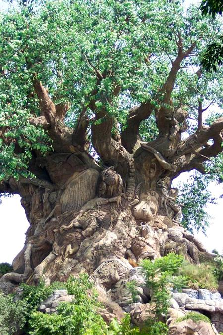 الشجرة العجيبة في الهند 44_1
