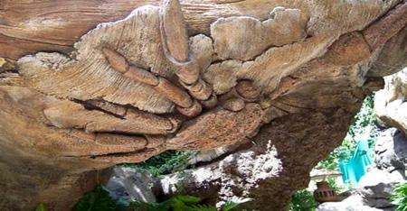 الشجرة العجيبة في الهند 45_1