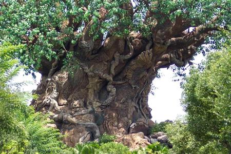 الشجرة العجيبة في الهند 46_1