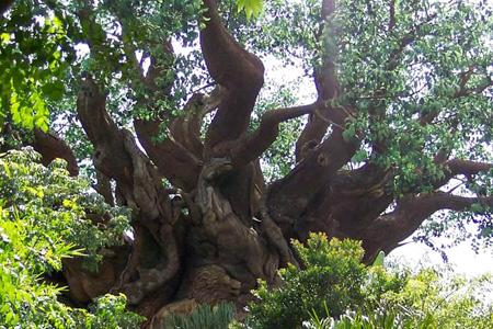 الشجرة العجيبة في الهند 48_1