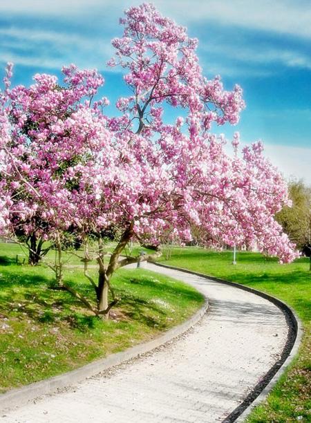 اغرب الاشجار في العالم 10_24