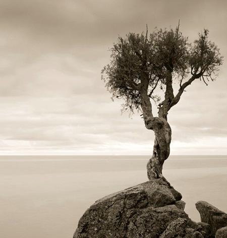 اغرب الاشجار في العالم 11_19