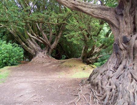اغرب الاشجار في العالم 13_18