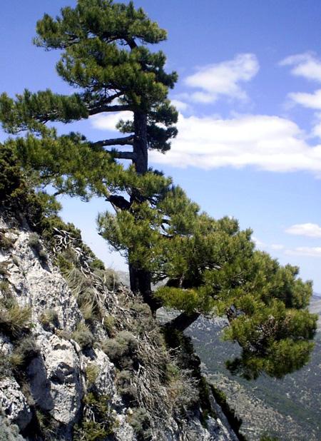 اغرب الاشجار في العالم 15_12