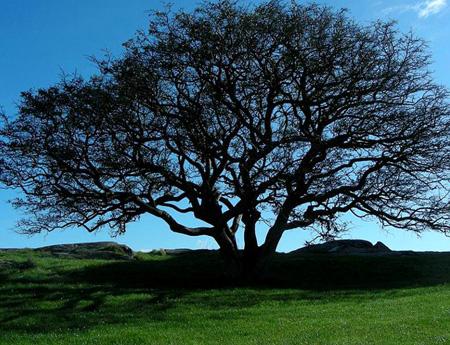 اغرب الاشجار في العالم 16_12