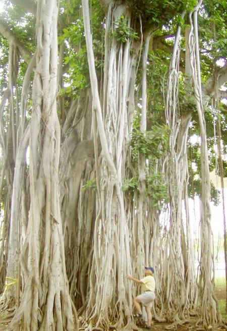 اغرب الاشجار في العالم 1_76