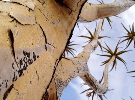 اغرب الاشجار في العالم 6_36