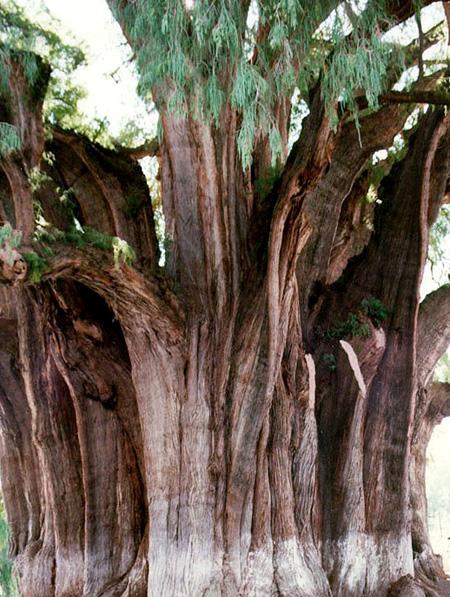 اغرب الاشجار في العالم 8_30