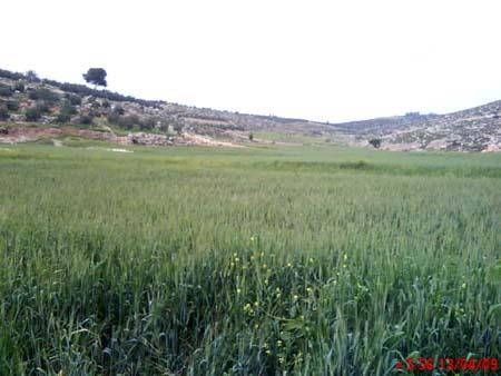موسوعة الصور لفلسطين الحبيبة 16_14