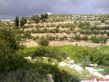 موسوعة الصور لفلسطين الحبيبة 19_11