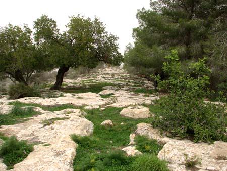 موسوعة الصور لفلسطين الحبيبة 6_20