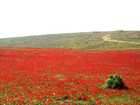 موسوعة الصور لفلسطين الحبيبة 9_20