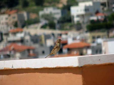 موسوعة الصور لفلسطين الحبيبة 31_7