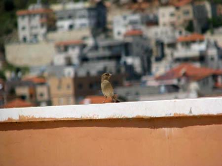 موسوعة الصور لفلسطين الحبيبة 32_7