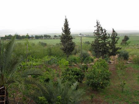 موسوعة الصور لفلسطين الحبيبة 6_22