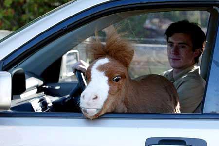 اصغر حصان في العالم O_12