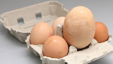 صورة اكبر بيضة فرخة في العالم 5_3