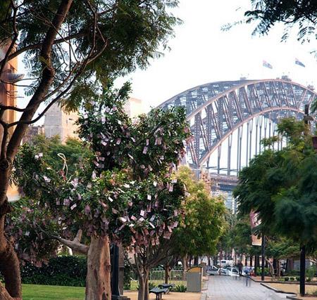 شجرة النقود في استراليا.. تعالوا نقطف النقود 1_9
