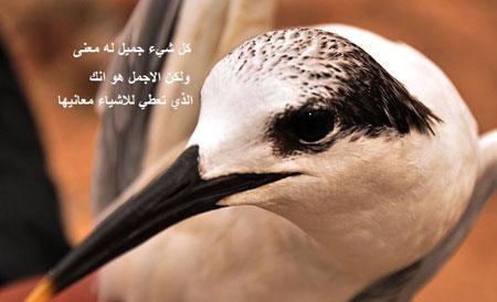 طير النورس في هذه الصور الاكثر من رائعة 180550_10150089048653671_66
